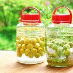 基本の自家製梅酒の作り方~梅の取り出し時期と梅の使い方・保存方法